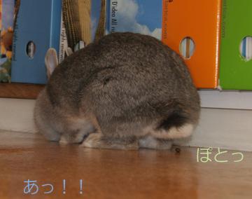 2008-09-07-046.jpg
