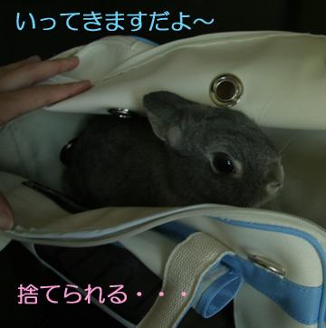 2008-09-09-004.jpg