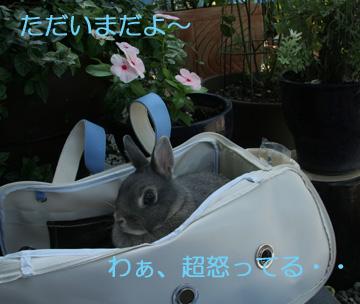 2008-09-09-012.jpg