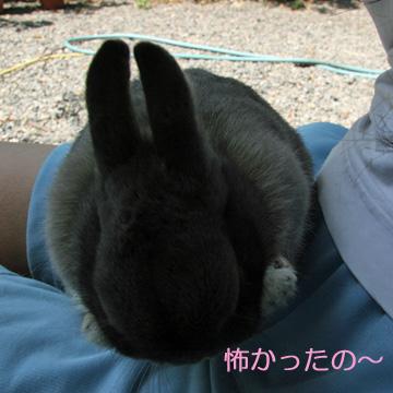 2008-09-09-016.jpg