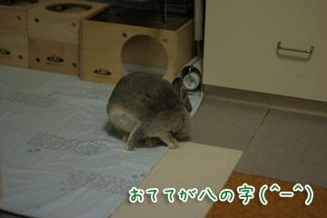 2009-11-27-009.jpg