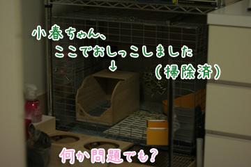 2009-11-27-052.jpg