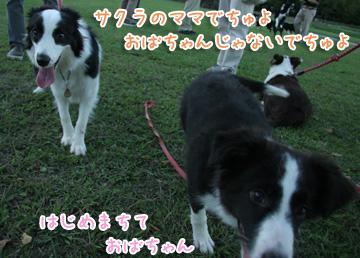 2010-10-10-031.jpg