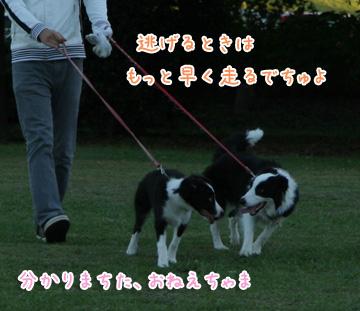 2010-10-10-033.jpg