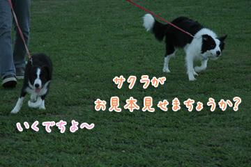 2010-10-10-036.jpg