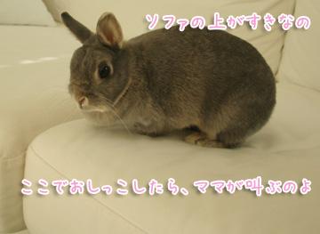 2010-11-30-001.jpg