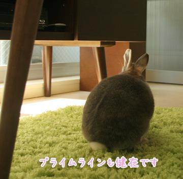 2010-11-30-008.jpg
