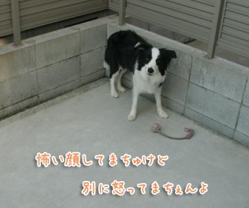 2010-12-06-001.jpg