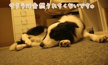 2010-12-06-010.jpg