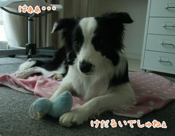 2010-12-07-006.jpg