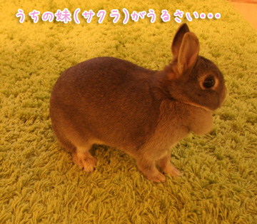 2010-12-09-001.jpg