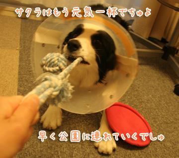 2010-12-09-011.jpg