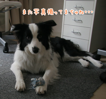 2010-12-21-009.jpg